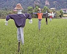 Japanese scarecrows in a rice paddy field
